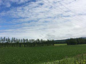 天に続く道の近くの景色